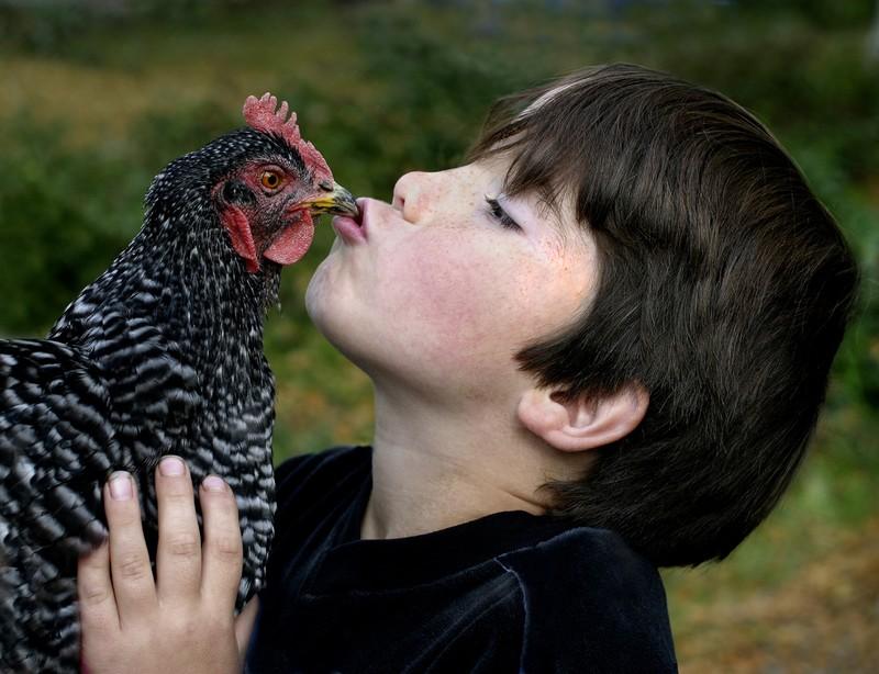 My Chicken Loves Me Karem Rivera 12-03