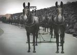 Twenty-mule-team  02-04 Boran, CA