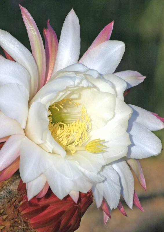 Atascadero Lake Cactus 04-21-04